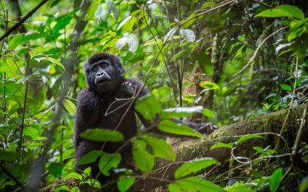 Uganda-Holiday-Adventures
