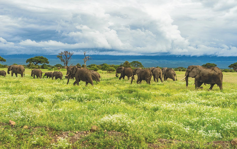 Freka Wildlife Holidays