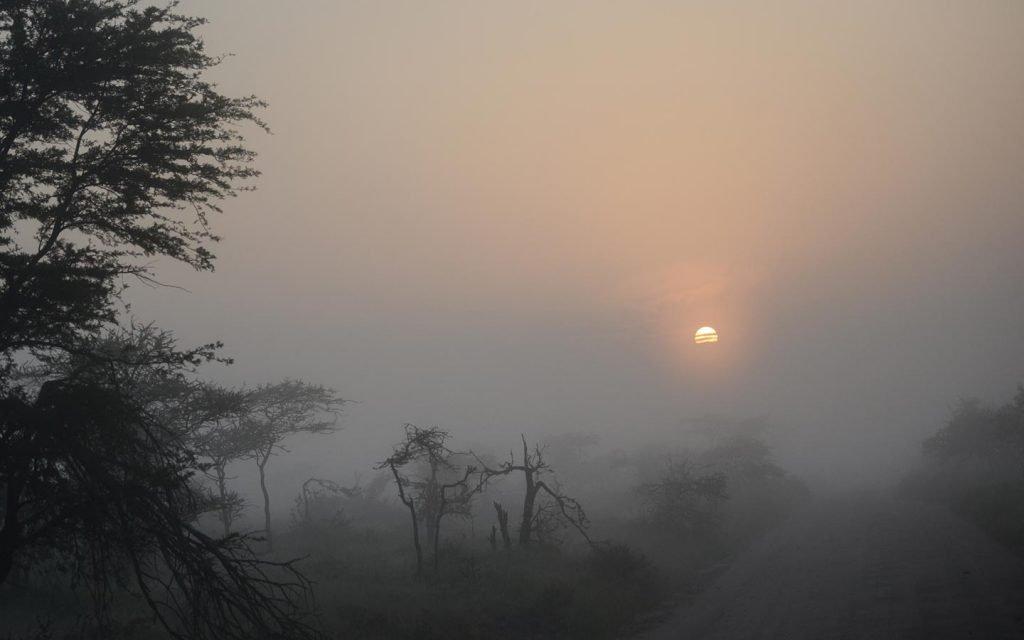 kibale-forest-flora