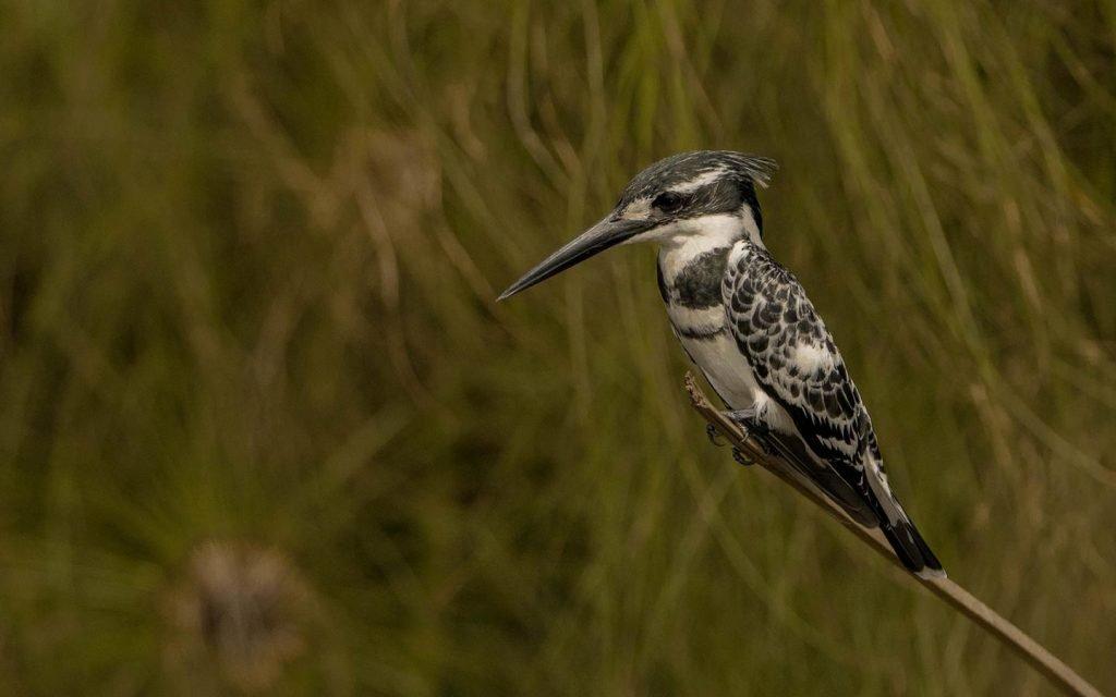 freka-african-bird-watching-murchison