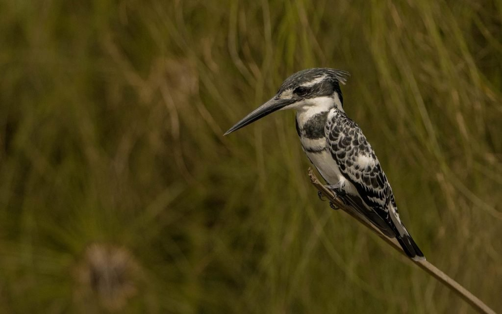 bird-watching-qenp